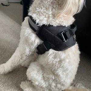 DoggyKingdom Black No Pull Dog Harness